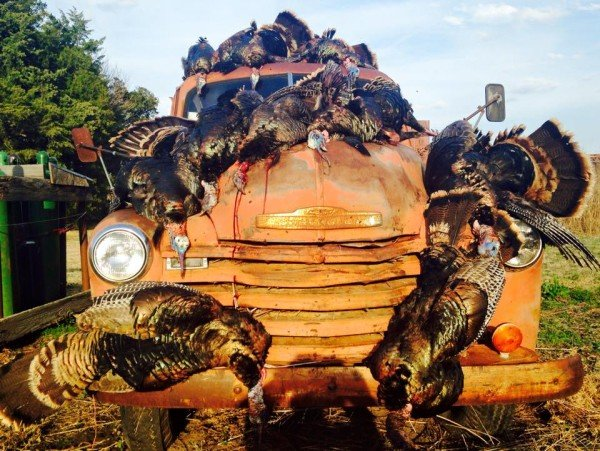 The rewards after a group turkey hunt in Lincoln County. Photo credit: Jim Gourley