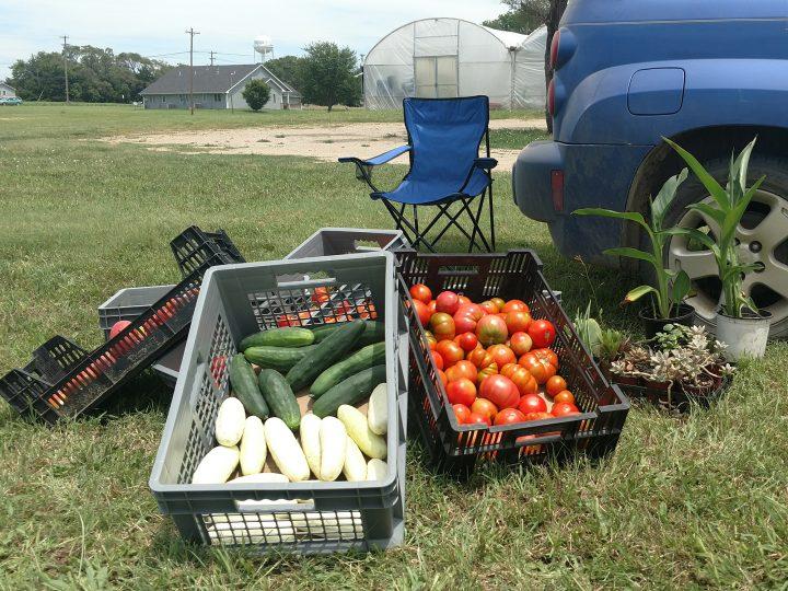 Rocky Hill Farm vegetables